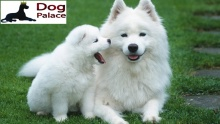50% off Boarding, Grooming, Dog Food & Accessories from Dog Palace (starting from $7.5 instead of $15)